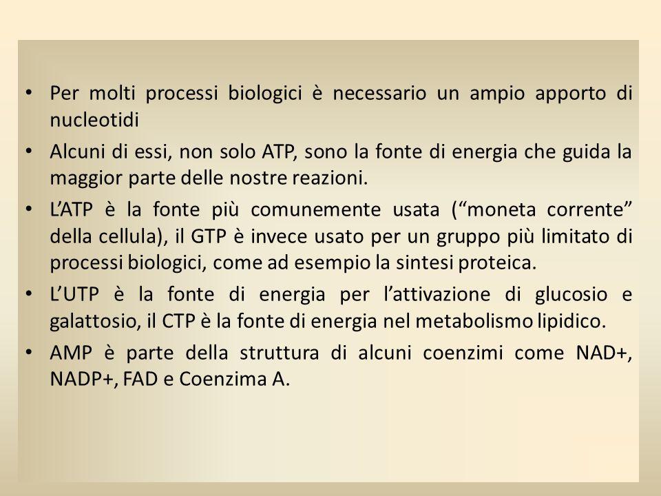 Per molti processi biologici è necessario un ampio apporto di nucleotidi Alcuni di essi, non solo ATP, sono la fonte di energia che guida la maggior p