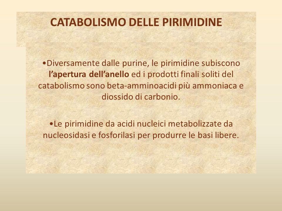CATABOLISMO DELLE PIRIMIDINE Diversamente dalle purine, le pirimidine subiscono l'apertura dell'anello ed i prodotti finali soliti del catabolismo son