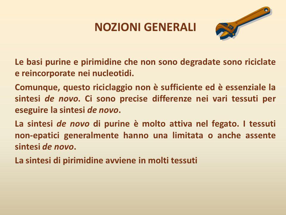NOZIONI GENERALI Le basi purine e pirimidine che non sono degradate sono riciclate e reincorporate nei nucleotidi. Comunque, questo riciclaggio non è