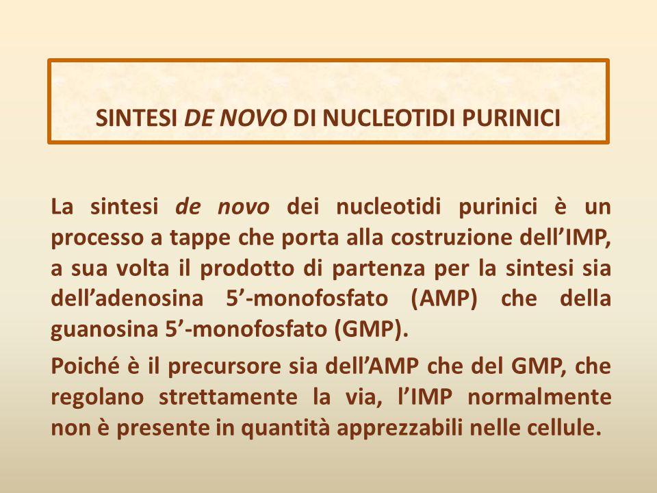 SINTESI DE NOVO DI NUCLEOTIDI PURINICI La sintesi de novo dei nucleotidi purinici è un processo a tappe che porta alla costruzione dell'IMP, a sua vol