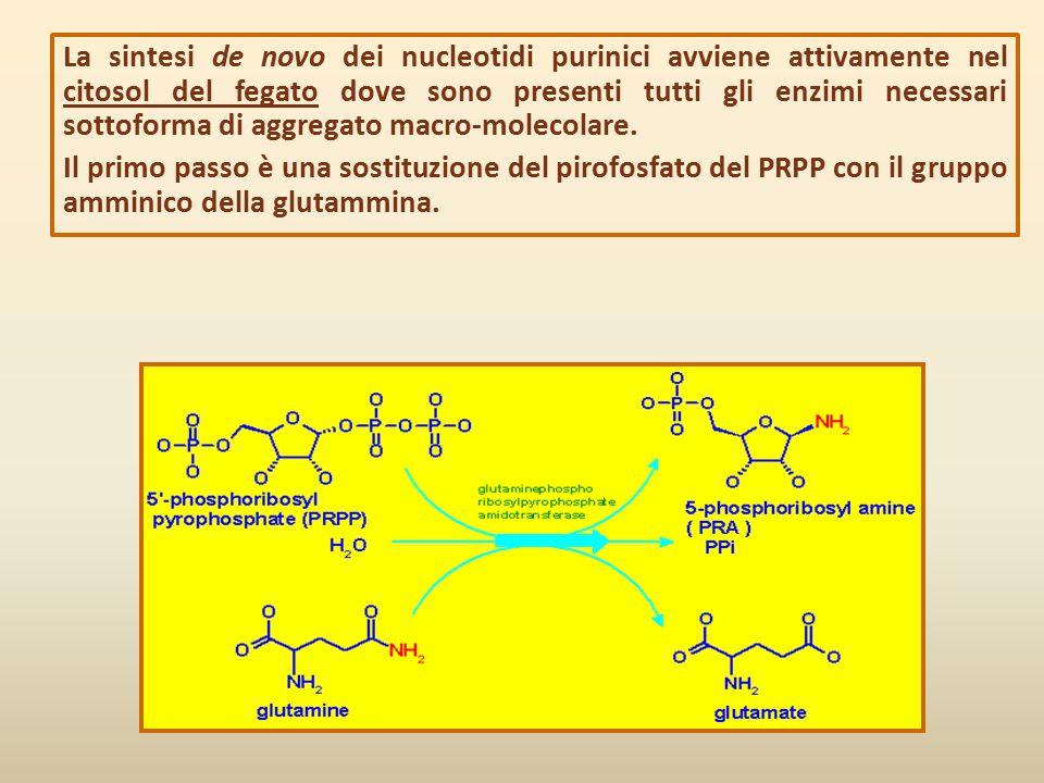 La sintesi de novo dei nucleotidi purinici avviene attivamente nel citosol del fegato dove sono presenti tutti gli enzimi necessari sottoforma di aggr