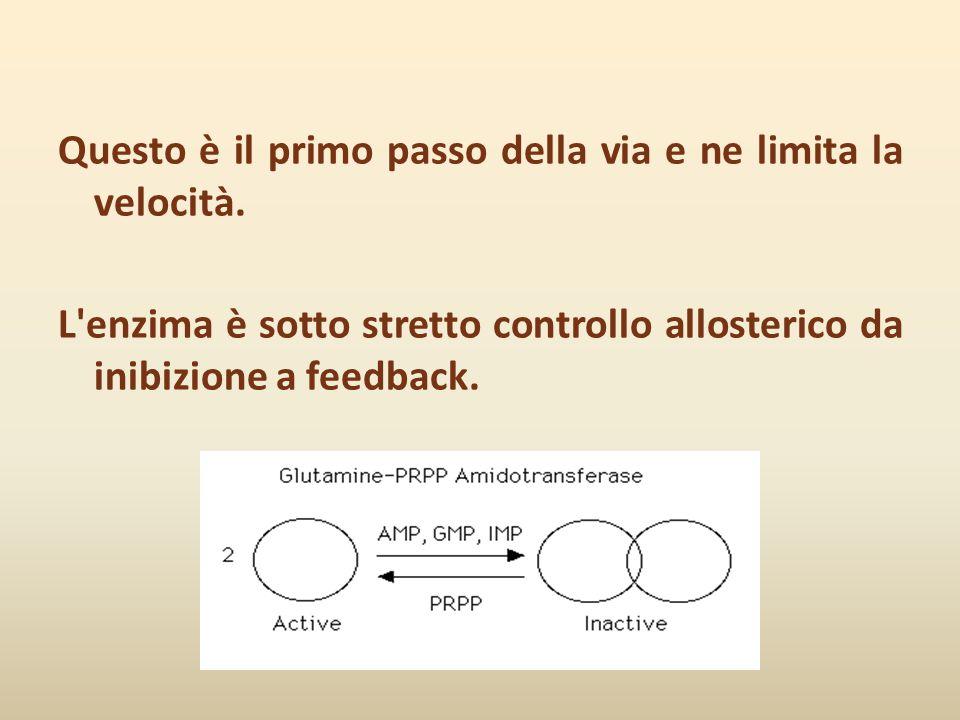 Questo è il primo passo della via e ne limita la velocità. L'enzima è sotto stretto controllo allosterico da inibizione a feedback.