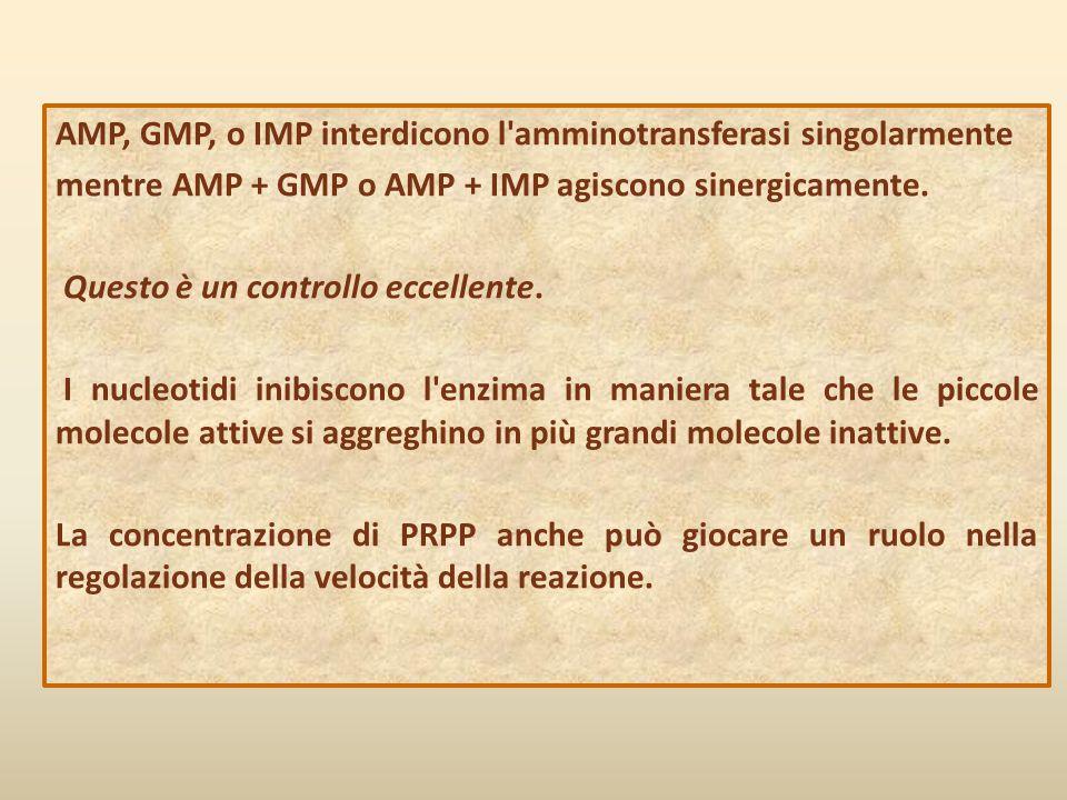 AMP, GMP, o IMP interdicono l'amminotransferasi singolarmente mentre AMP + GMP o AMP + IMP agiscono sinergicamente. Questo è un controllo eccellente.
