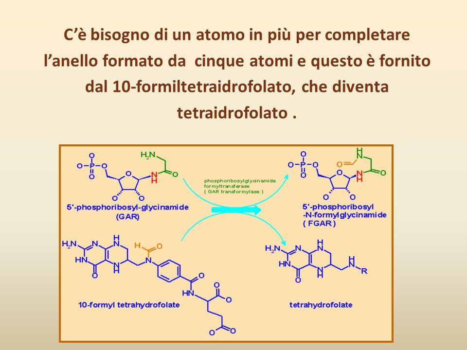C'è bisogno di un atomo in più per completare l'anello formato da cinque atomi e questo è fornito dal 10-formiltetraidrofolato, che diventa tetraidrof