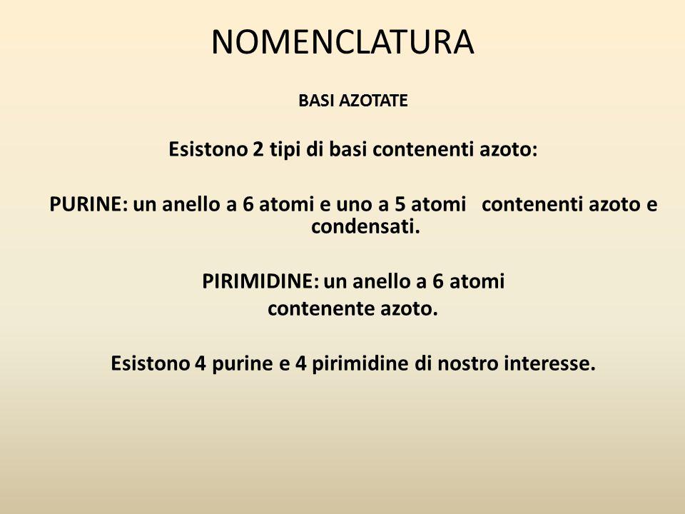 PURINE ANELLO A 6 ATOMI E ANELLO A 5 ATOMI CONTENENTI AZOTO E FUSI INSIEME 1)ADENINA: 6-AMMINO-PURINA 2)GUANINA: 2-AMMINO,6-OSSI-PURINA 3)IPOXANTINA: 6-OSSI-PURINA 4)XANTINA: 2,6-DIOSSI-PURINA Adenina e Guanina si trovano sia nel DNA che nell'RNA.