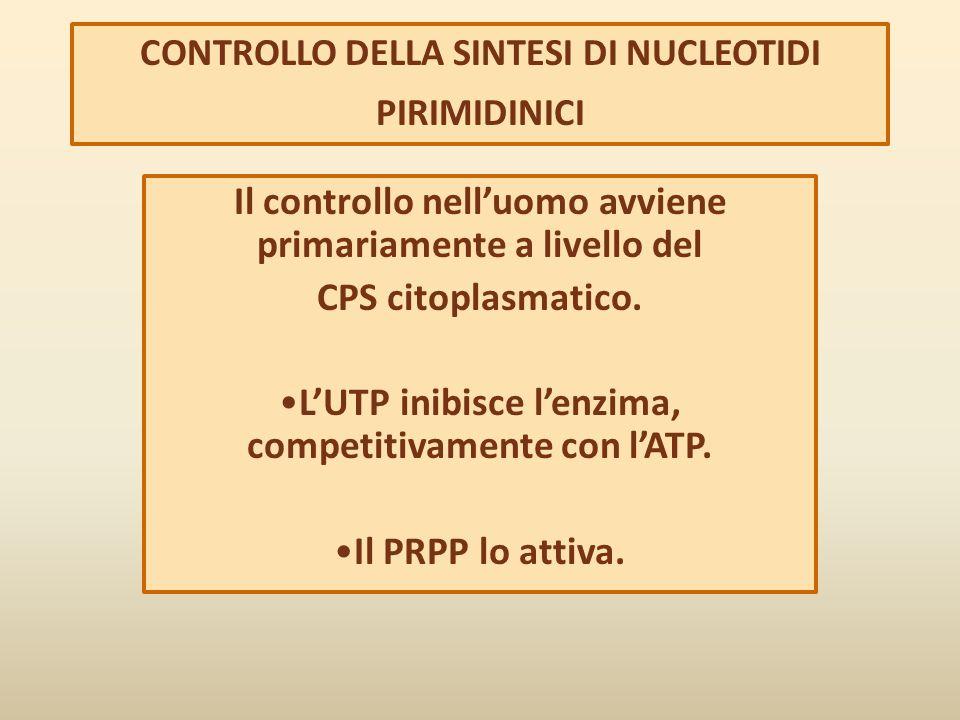 CONTROLLO DELLA SINTESI DI NUCLEOTIDI PIRIMIDINICI Il controllo nell'uomo avviene primariamente a livello del CPS citoplasmatico. L'UTP inibisce l'enz