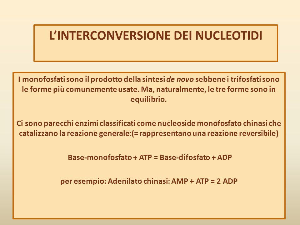 L'INTERCONVERSIONE DEI NUCLEOTIDI I monofosfati sono il prodotto della sintesi de novo sebbene i trifosfati sono le forme più comunemente usate. Ma, n