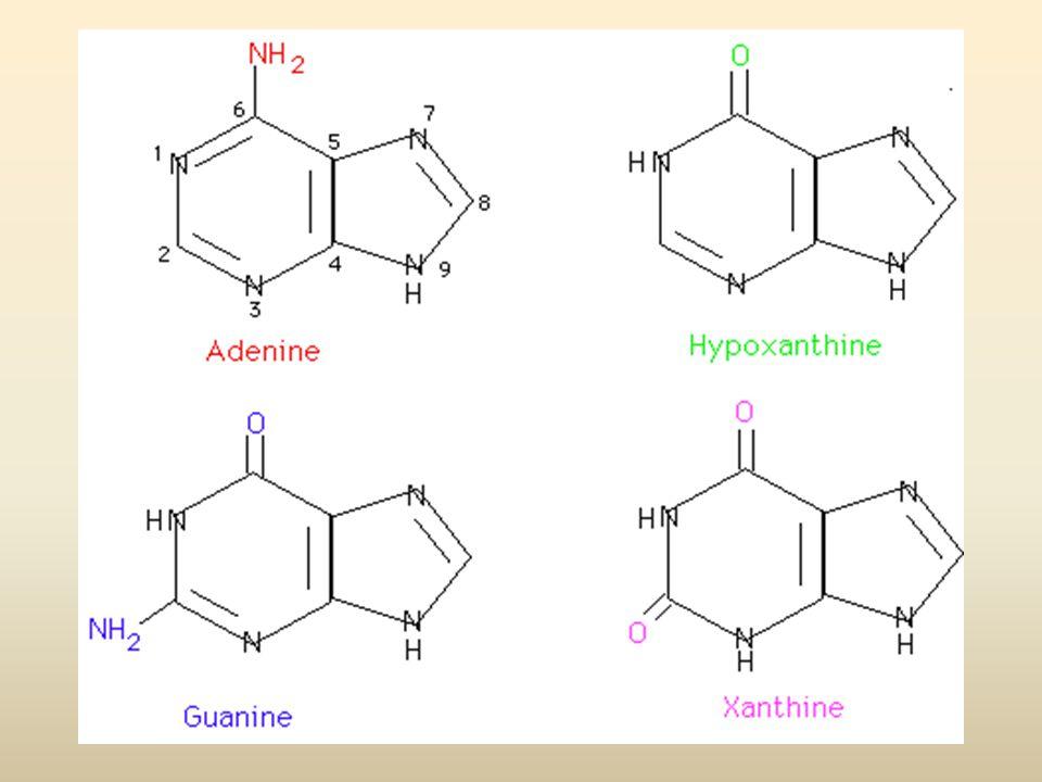 PIRIMIDINE ANELLO A 6 ATOMI CONTENENTE AZOTO 1)URACILE:2,4-DIOSSI-PIRIMIDINA 2)TIMINA: 2,4-DIOSSI-5-METIL-PIRIMIDINA 3) CITOSINA: 2-OSSI-4-AMMINO-PIRIMIDINA 4)ACIDO OROTICO: 2,4-DIOSSI-6-CARBOSSI-PIRIMIDINA La Citosina si trova sia nel DNA che nell'RNA, l'Uracile si trova solo nell'RNA, la Timina si trova generalmente nel DNA.