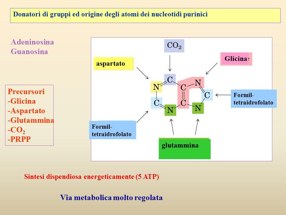 Donatori di gruppi ed origine degli atomi dei nucleotidi purinici aspartato Formil- tetraidrofolato Formil- tetraidrofolato glutammina Glicina Adenino