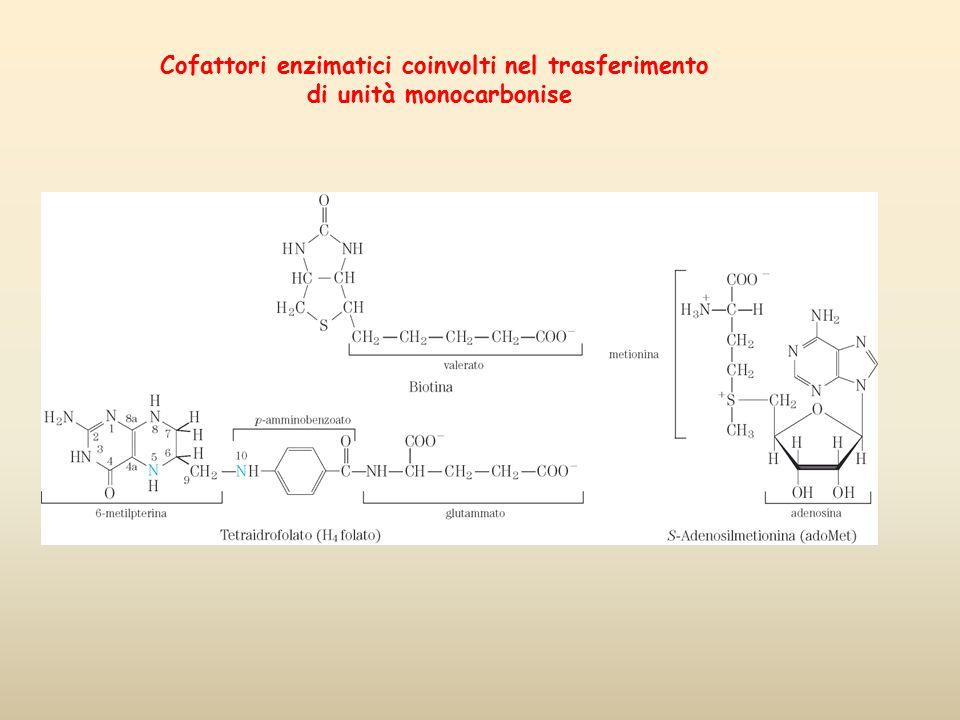 Cofattori enzimatici coinvolti nel trasferimento di unità monocarbonise