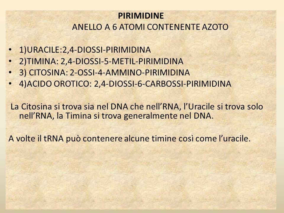 PIRIMIDINE ANELLO A 6 ATOMI CONTENENTE AZOTO 1)URACILE:2,4-DIOSSI-PIRIMIDINA 2)TIMINA: 2,4-DIOSSI-5-METIL-PIRIMIDINA 3) CITOSINA: 2-OSSI-4-AMMINO-PIRI
