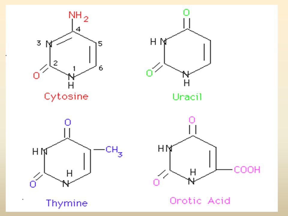 CATABOLISMO DELLE PIRIMIDINE Diversamente dalle purine, le pirimidine subiscono l'apertura dell'anello ed i prodotti finali soliti del catabolismo sono beta-amminoacidi più ammoniaca e diossido di carbonio.
