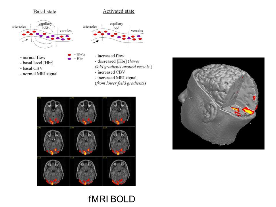 fMRI BOLD