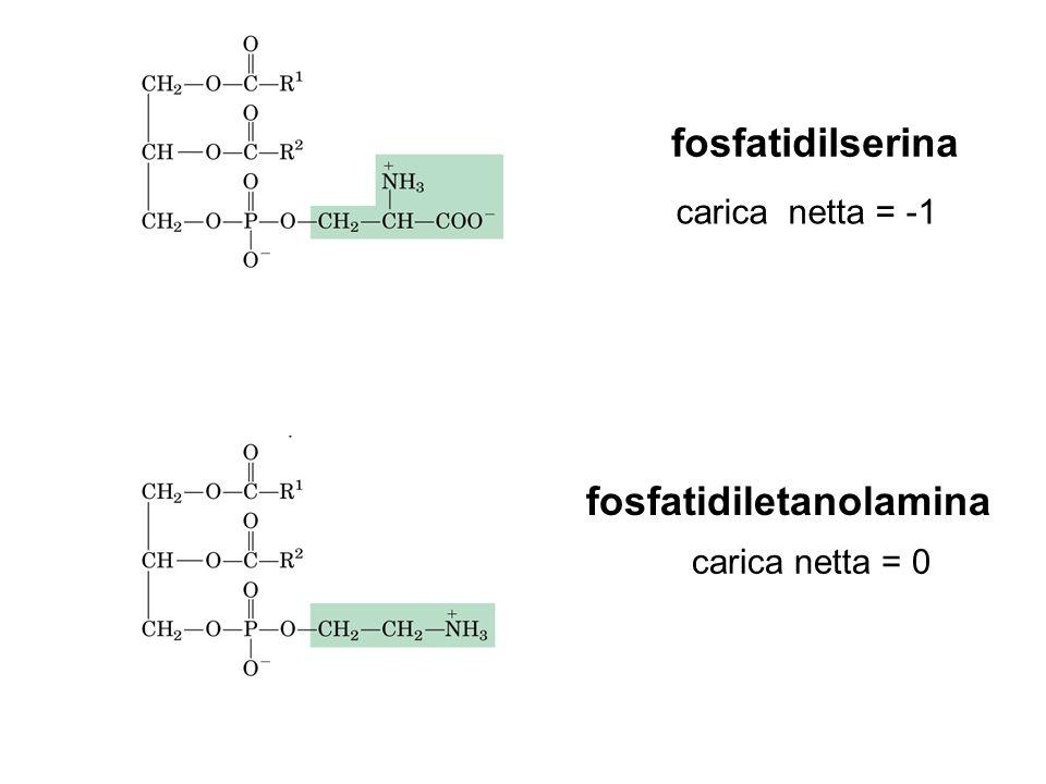 HO CH 2 PELLE 7-deidrocolesterolo Pre-vitamina D 3 fotolisi raggi UV solari CH 2 HO vitamina D 3 colecalciferolo isomerizzazione