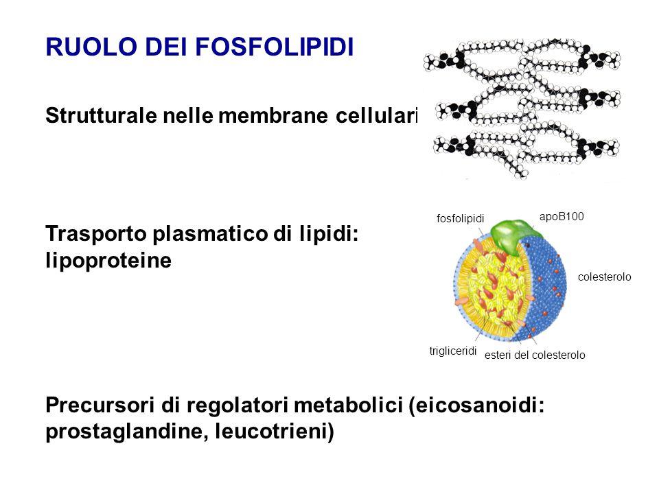 SFINGOLIPIDI non contengono glicerolo ma contengono sfingosina - un amminoalcol a 18 atomi di C con doppio legame trans acido grasso a catena lunga una testa polare (X) Classi  Sfingofosfolipidi (X = es.