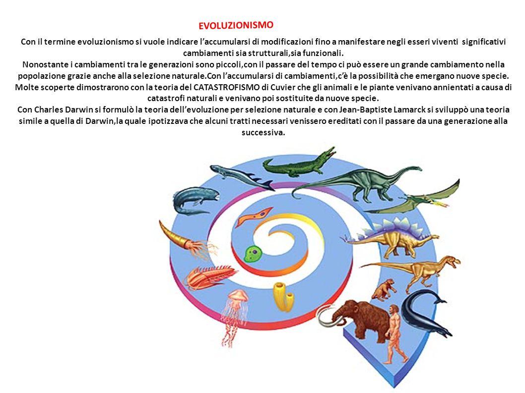 EVOLUZIONISMO Con il termine evoluzionismo si vuole indicare l'accumularsi di modificazioni fino a manifestare negli esseri viventi significativi camb