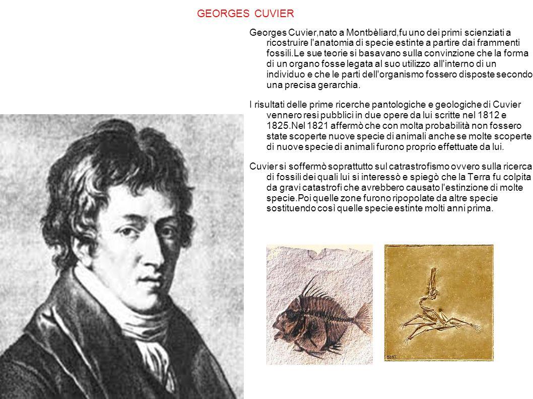 GEORGES CUVIER Georges Cuvier,nato a Montbèliard,fu uno dei primi scienziati a ricostruire l'anatomia di specie estinte a partire dai frammenti fossil