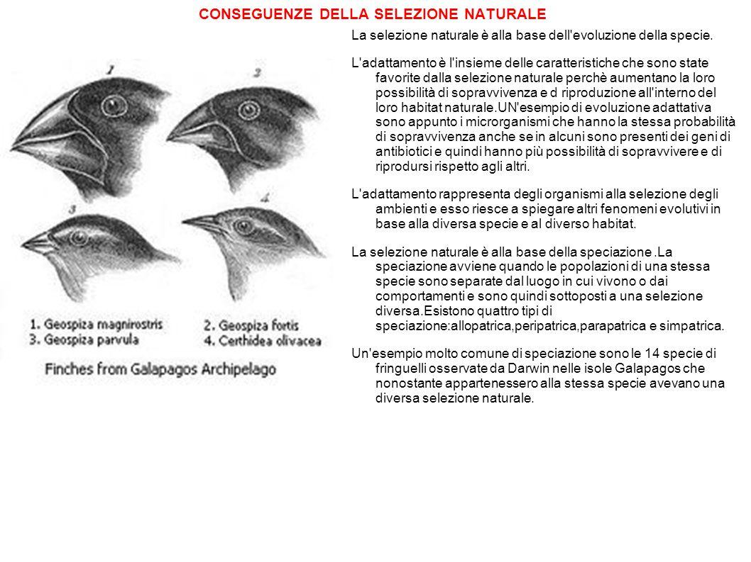 CONSEGUENZE DELLA SELEZIONE NATURALE La selezione naturale è alla base dell'evoluzione della specie. L'adattamento è l'insieme delle caratteristiche c