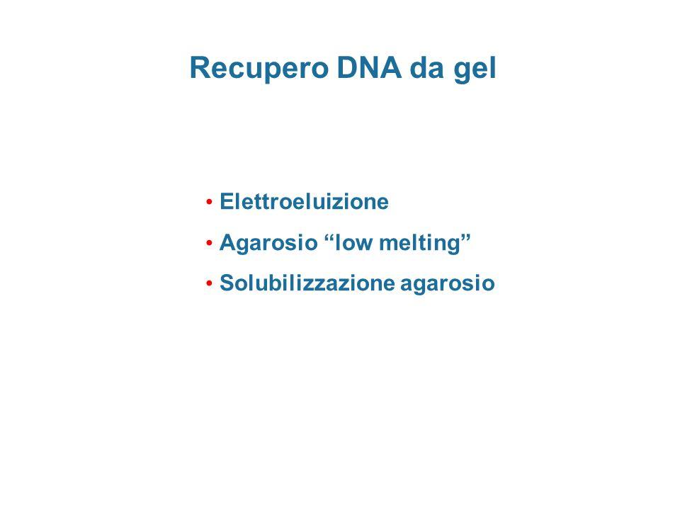"Recupero DNA da gel Elettroeluizione Agarosio ""low melting"" Solubilizzazione agarosio"