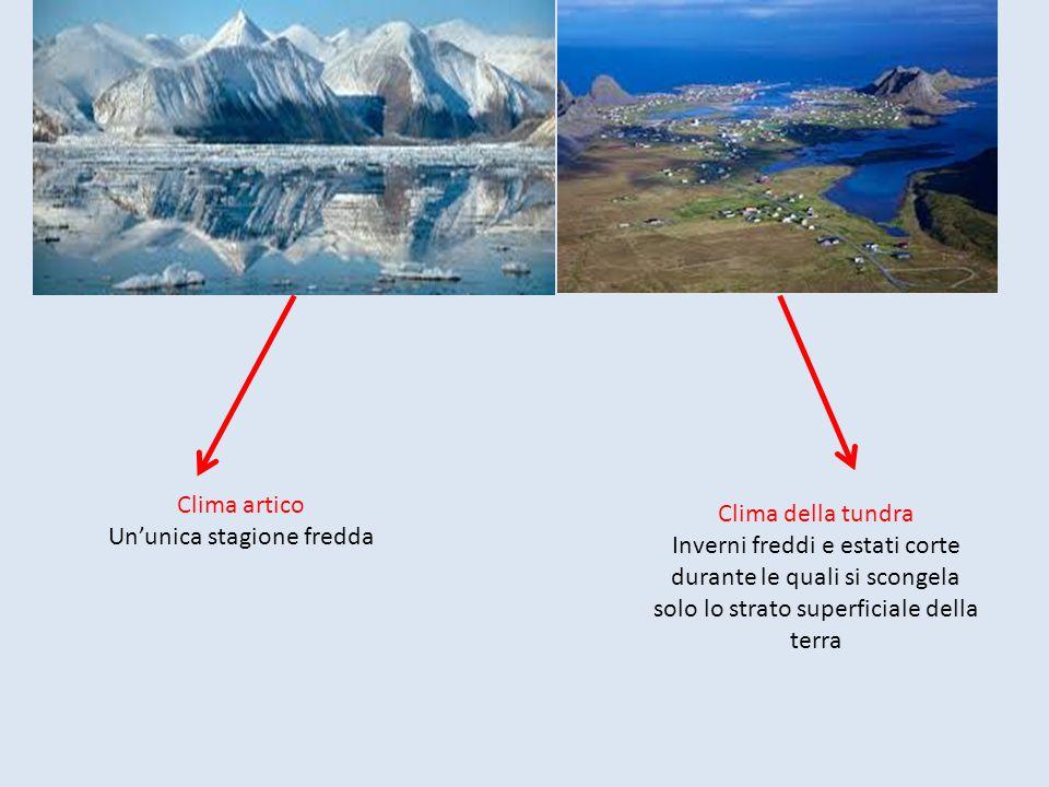 Clima artico Un'unica stagione fredda Clima della tundra Inverni freddi e estati corte durante le quali si scongela solo lo strato superficiale della