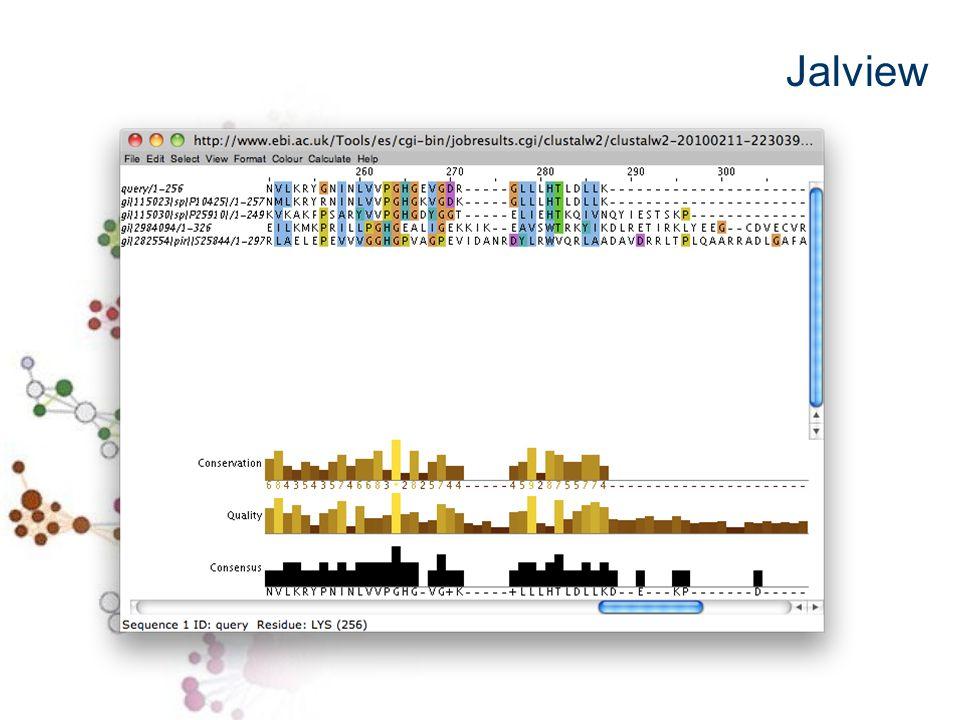 Predizione della struttura delle proteine Ricostruzione Albero filogenetico Motivi di sequenza conservati …