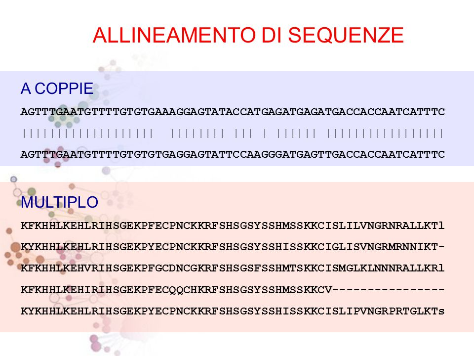 ALLINEAMENTO DI SEQUENZE Procedura per comparare due o più sequenze, volta a stabilire un insieme di relazioni biunivoche tra coppie di residui delle