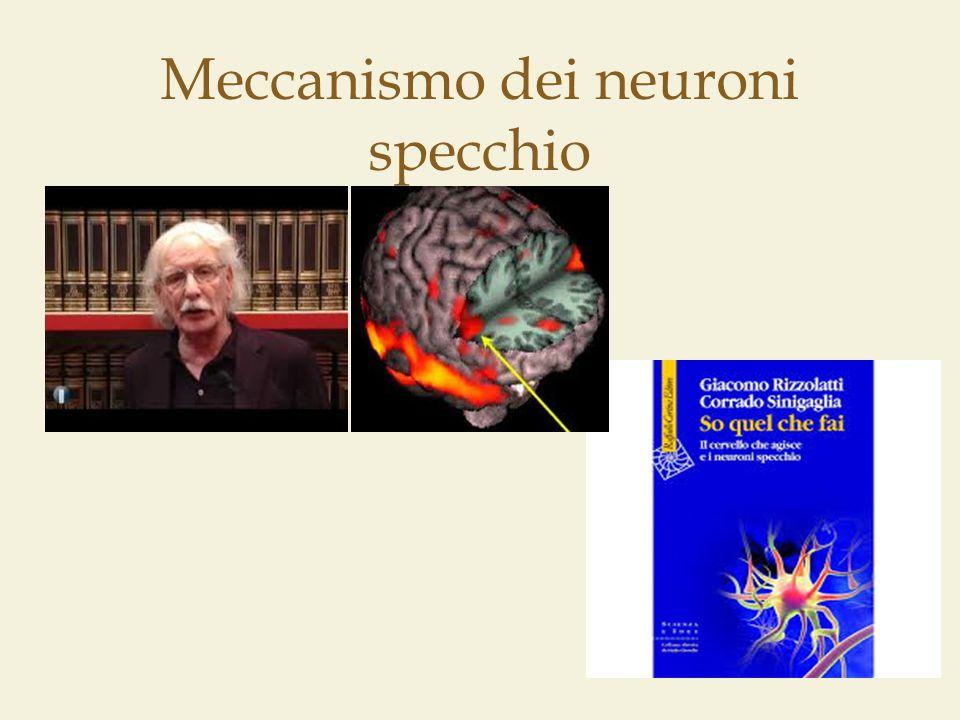 Meccanismo dei neuroni specchio