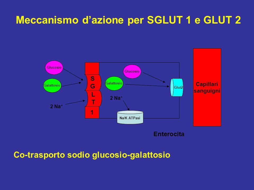 LTLT SGSG 1 Glucosio Galattosio 2 Na + Co-trasporto sodio glucosio-galattosio Glucosio Galattosio 2 Na + Na/K ATPasi Glut2 Enterocita Meccanismo d'azi