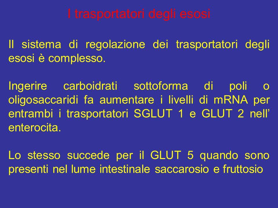 I trasportatori degli esosi Il sistema di regolazione dei trasportatori degli esosi è complesso. Ingerire carboidrati sottoforma di poli o oligosaccar