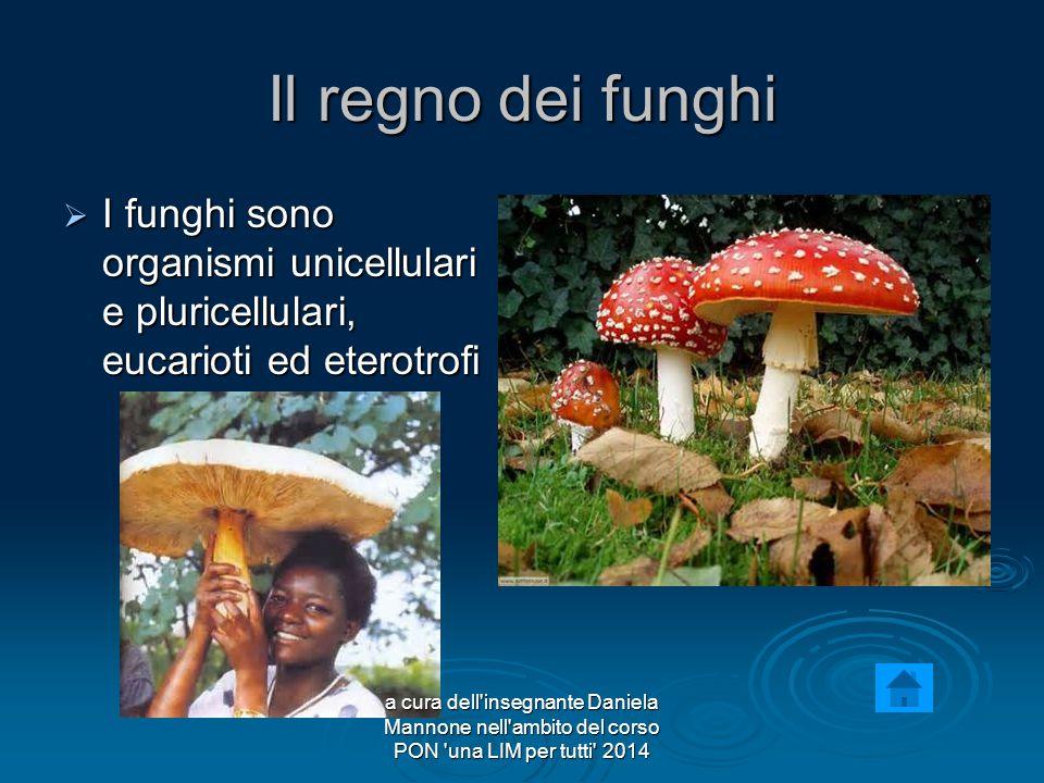 Il regno dei funghi IIII funghi sono organismi unicellulari e pluricellulari, eucarioti ed eterotrofi a cura dell insegnante Daniela Mannone nell ambito del corso PON una LIM per tutti 2014
