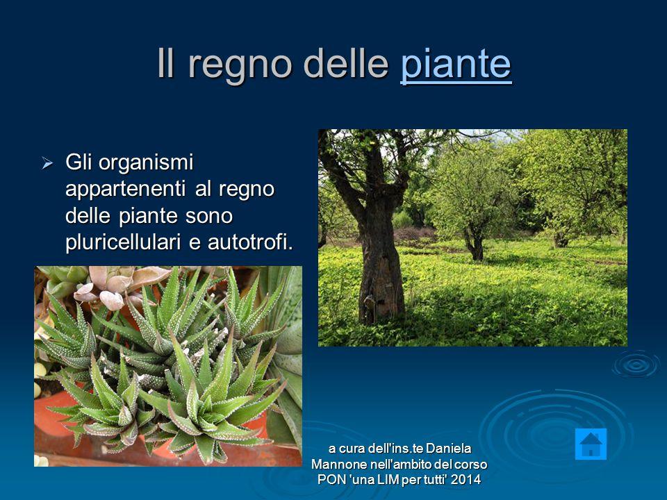 Il regno delle piante piante  Gli organismi appartenenti al regno delle piante sono pluricellulari e autotrofi.