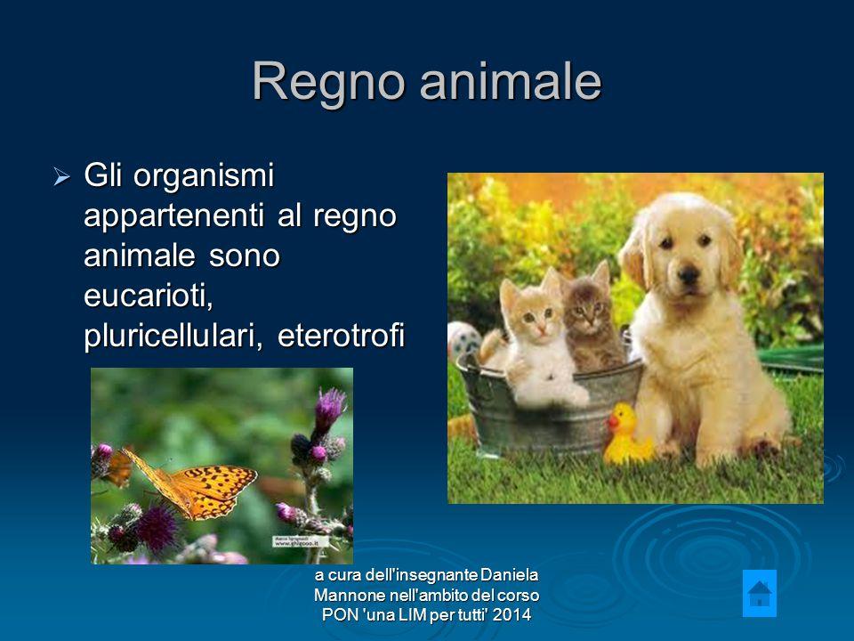 Regno animale  Gli organismi appartenenti al regno animale sono eucarioti, pluricellulari, eterotrofi a cura dell insegnante Daniela Mannone nell ambito del corso PON una LIM per tutti 2014