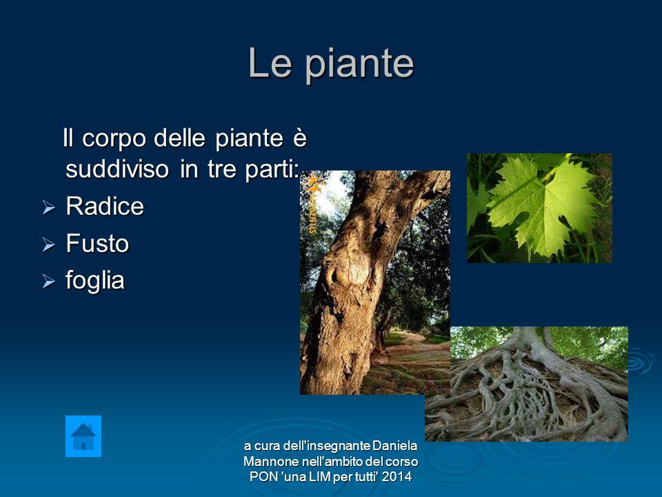 Le piante Il corpo delle piante è suddiviso in tre parti: Il corpo delle piante è suddiviso in tre parti:  Radice  Fusto  foglia a cura dell insegnante Daniela Mannone nell ambito del corso PON una LIM per tutti 2014