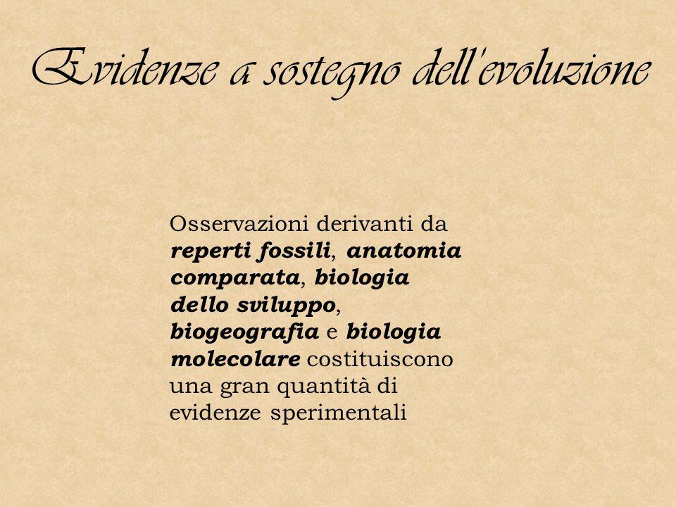Evidenze a sostegno dell'evoluzione Osservazioni derivanti da reperti fossili, anatomia comparata, biologia dello sviluppo, biogeografia e biologia molecolare costituiscono una gran quantità di evidenze sperimentali