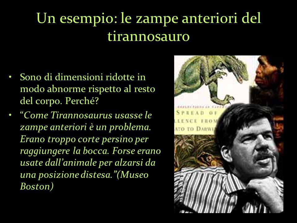 Un esempio: le zampe anteriori del tirannosauro Sono di dimensioni ridotte in modo abnorme rispetto al resto del corpo.