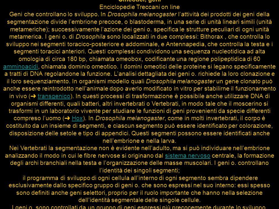Omeotici, geni Enciclopedie Treccani on line Geni che controllano lo sviluppo.