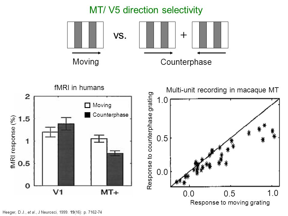 + Moving Heeger, D.J., et al., J Neurosci, 1999. 19(16): p. 7162-74 vs. MT/ V5 direction selectivity Counterphase Response to counterphase grating 0.0