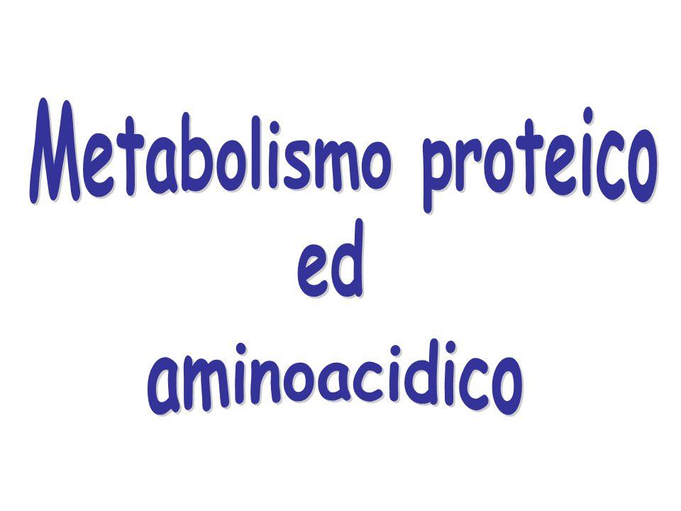 Il destino del gruppo amminico degli aminoacidi è di passare sul glutammato Il glutammato è infatti l'unico aminoacido che può essere successivamente desaminato,