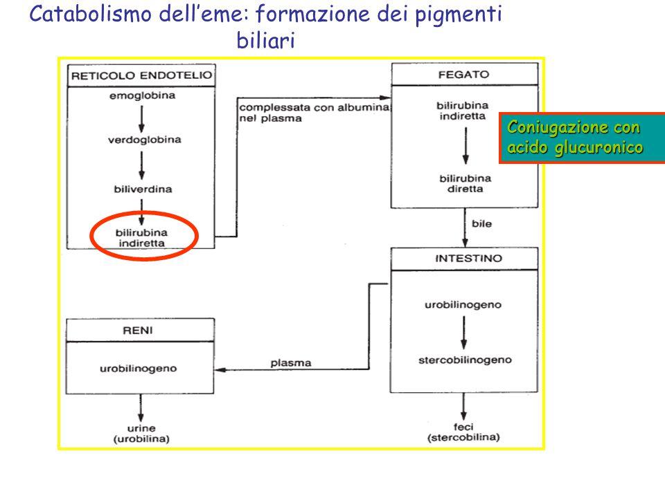Catabolismo dell'eme: formazione dei pigmenti biliari Coniugazione con acido glucuronico