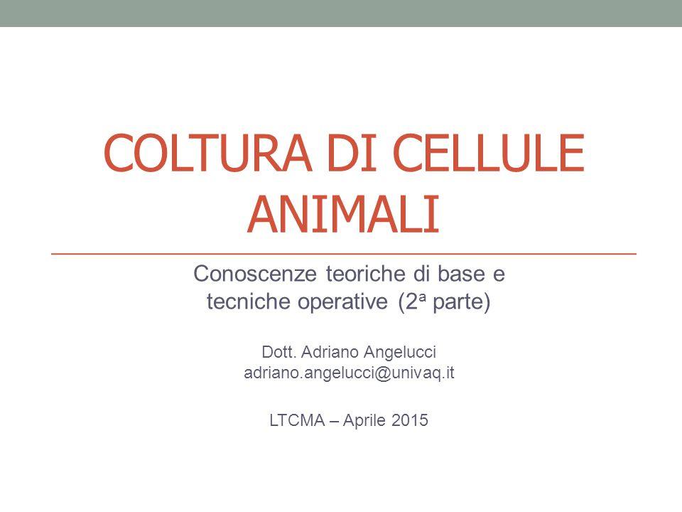 COLTURA DI CELLULE ANIMALI Conoscenze teoriche di base e tecniche operative (2 a parte) Dott. Adriano Angelucci adriano.angelucci@univaq.it LTCMA – Ap