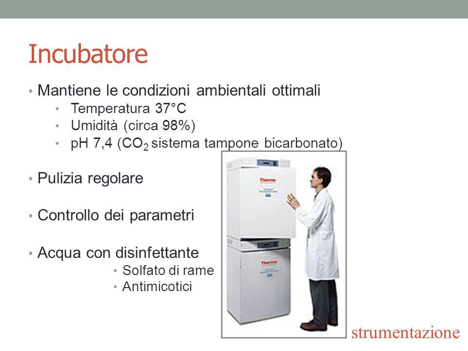Incubatore Mantiene le condizioni ambientali ottimali Temperatura 37°C Umidità (circa 98%) pH 7,4 (CO 2 sistema tampone bicarbonato) Pulizia regolare