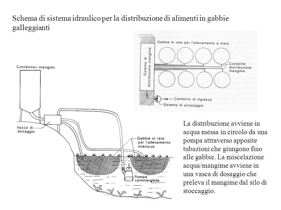 Schema di sistema idraulico per la distribuzione di alimenti in gabbie galleggianti La distribuzione avviene in acqua messa in circolo da una pompa at