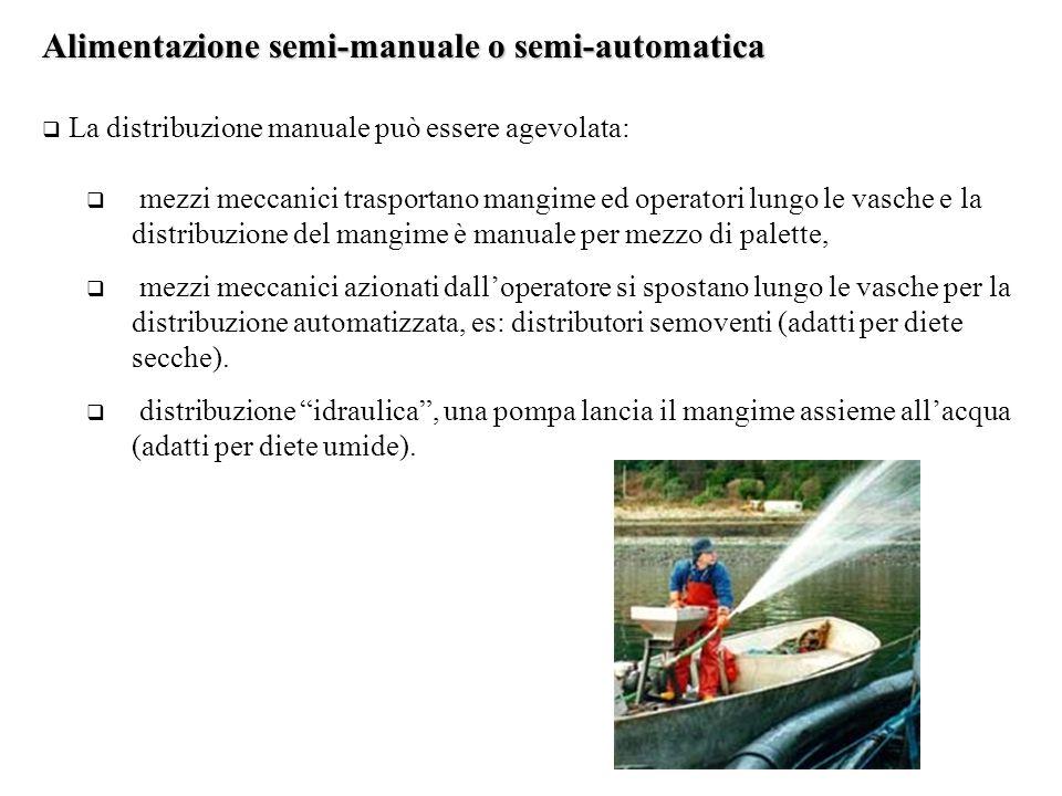 Alimentazione semi-manuale o semi-automatica  La distribuzione manuale può essere agevolata:  mezzi meccanici trasportano mangime ed operatori lungo