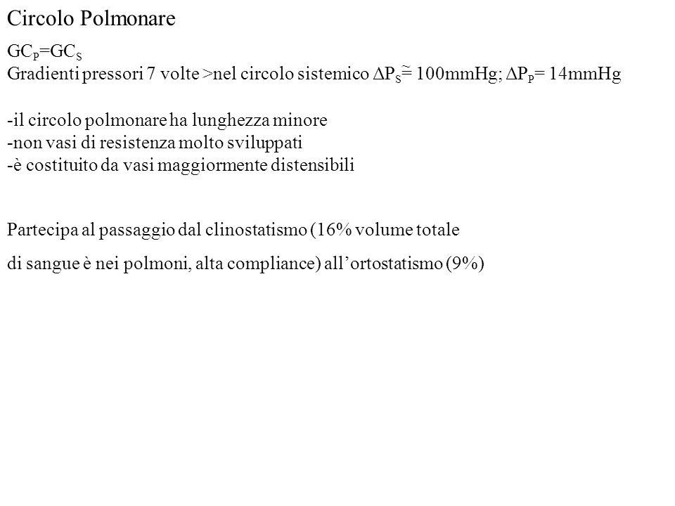 Circolo Polmonare GC P =GC S Gradienti pressori 7 volte >nel circolo sistemico ΔP S = 100mmHg; ΔP P = 14mmHg ~ -il circolo polmonare ha lunghezza mino