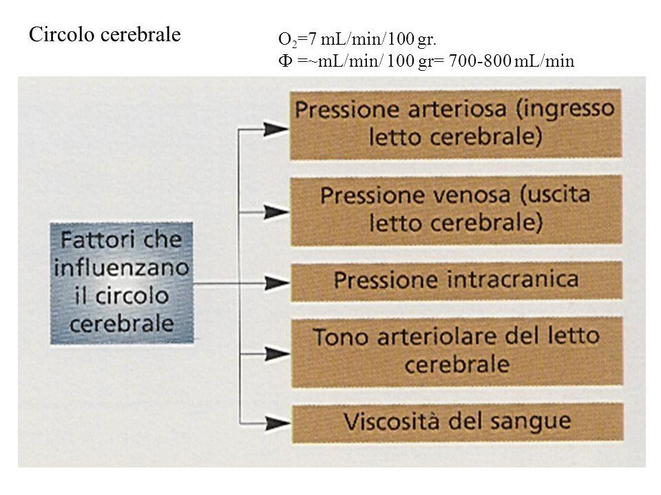Circolo cerebrale O 2 =7 mL/min/100 gr. Ф =~mL/min/ 100 gr= 700-800 mL/min