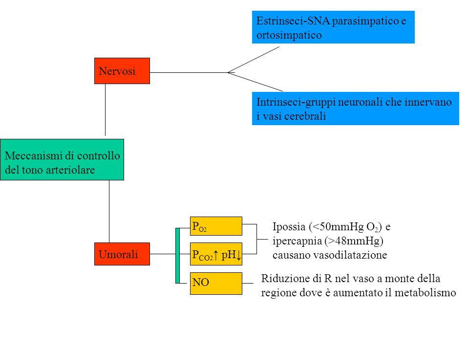 Nervosi Meccanismi di controllo del tono arteriolare P O 2 UmoraliP CO 2 ↑ pH↓ NO Riduzione di R nel vaso a monte della regione dove è aumentato il me