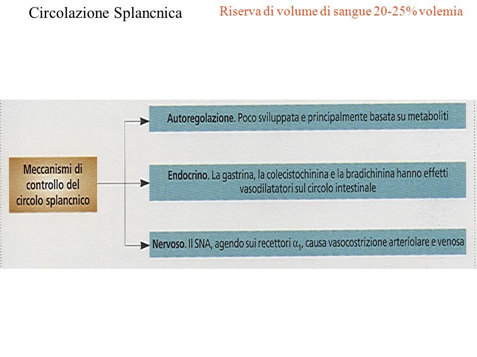 Circolazione Splancnica Riserva di volume di sangue 20-25% volemia
