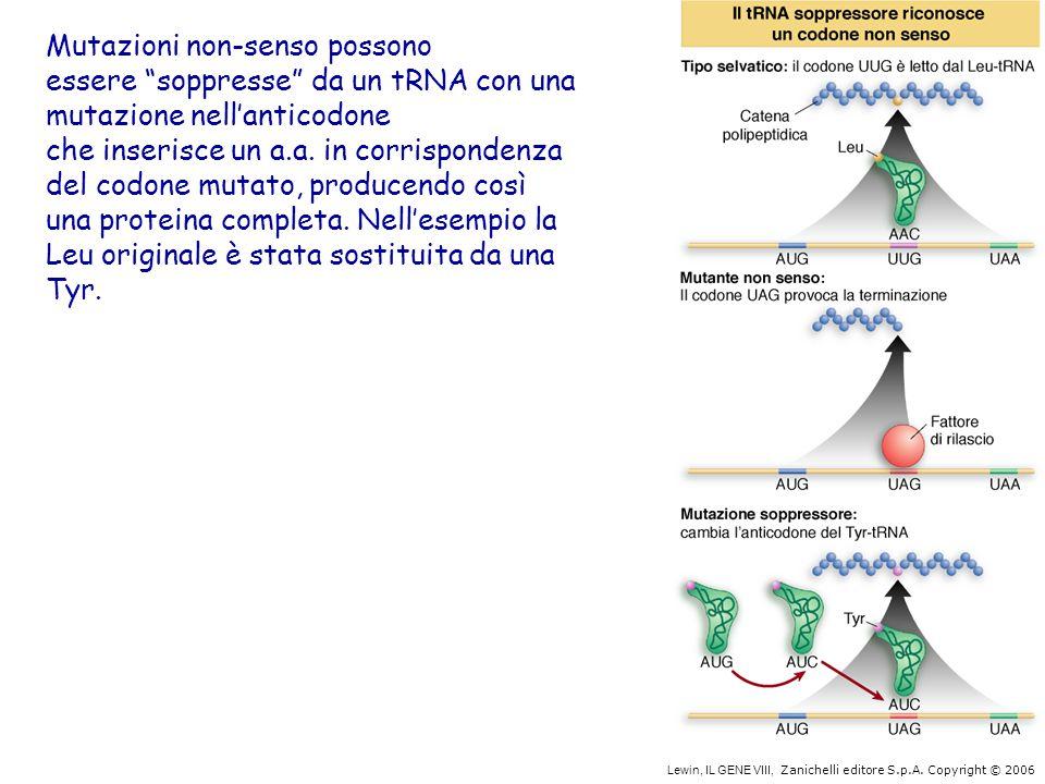 """Lewin, IL GENE VIII, Zanichelli editore S.p.A. Copyright © 2006 Mutazioni non-senso possono essere """"soppresse"""" da un tRNA con una mutazione nell'antic"""