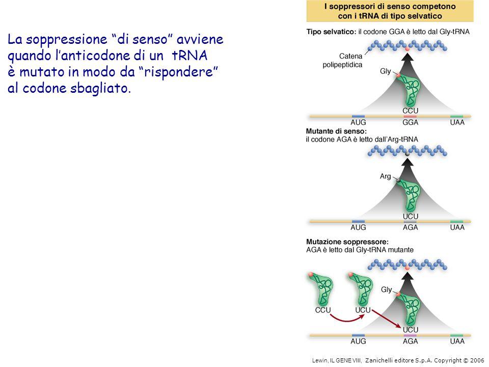 """Lewin, IL GENE VIII, Zanichelli editore S.p.A. Copyright © 2006 La soppressione """"di senso"""" avviene quando l'anticodone di un tRNA è mutato in modo da"""