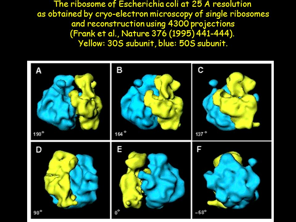 The ribosome of Escherichia coli at 25 A resolution as obtained by cryo-electron microscopy of single ribosomes and reconstruction using 4300 projecti